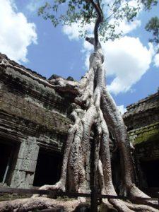 カジュマルの木